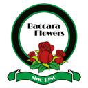 اجاره ماشین عروس گلهای باکارا